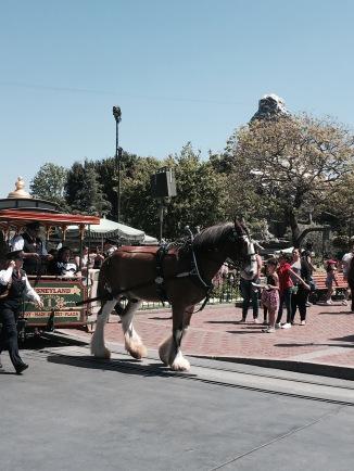 horses main street