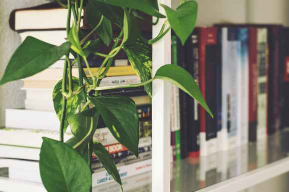 blur bookcase books bookshelf