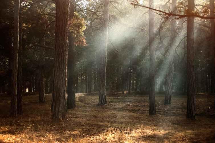dawn environment fall fog